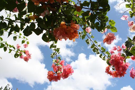 夏沙のブログ-okinawa4