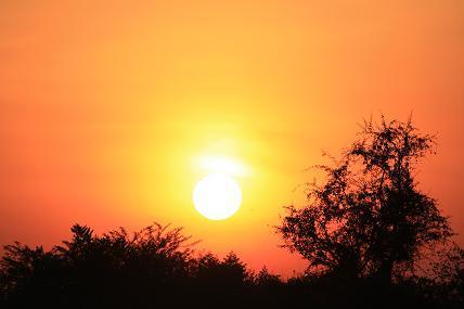 夏沙のブログ-africa1