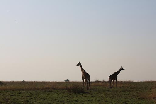 夏沙のブログ-africa2